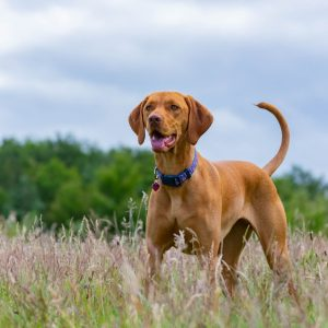 Dog in a field surrounded by grasses